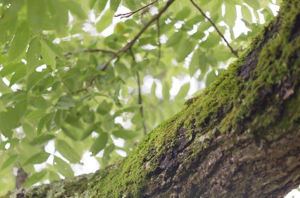 History of a Tree
