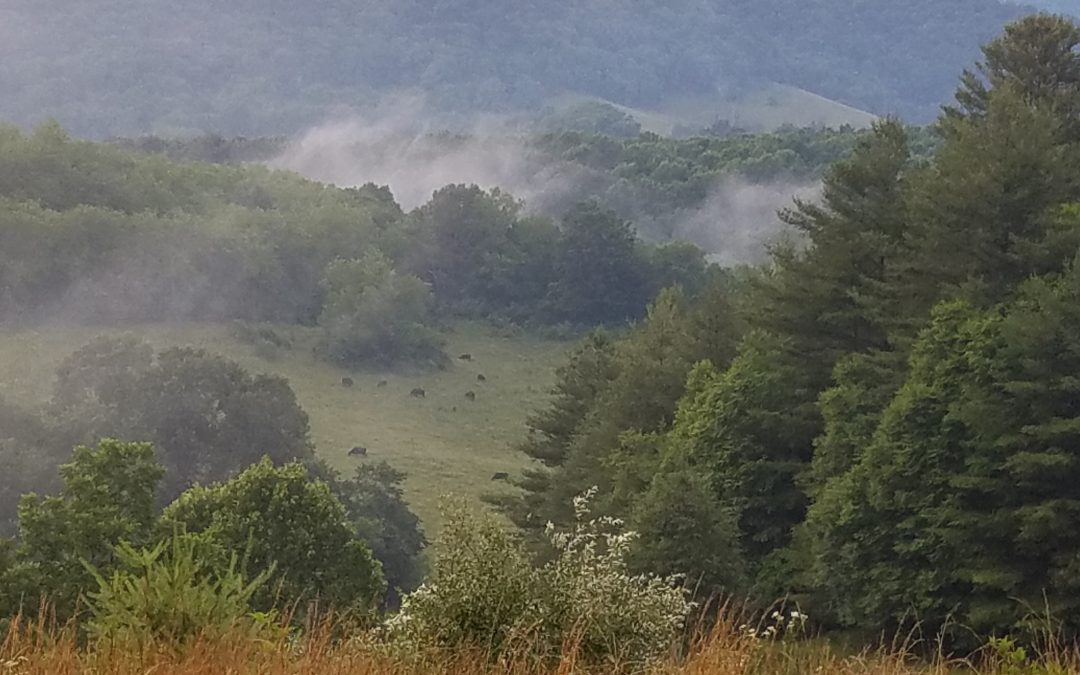 Foggy morning up in the mountains.